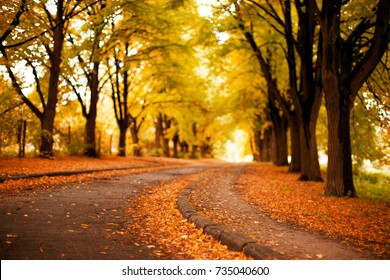 Autumn  Landscape Background. Golden Autumn, Beautiful Autumn Landscape with Yellow and Orange lice on Trees  in the Park  - Image