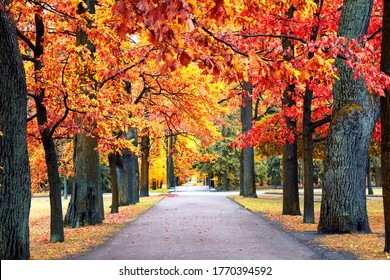 Autumn landscape, beautiful city park with fallen yellow leaves. Autumn scenery with footpath in colorful fall forest.