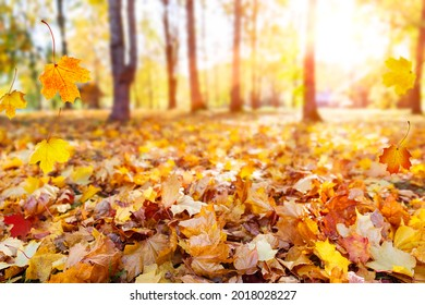 Autumn landscape, beautiful city park with fallen yellow leaves. Close up of bright foliage in sunny autumn park. Concept of fall season. Golden autumn card.
