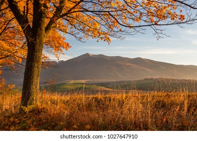 Autumn landscape beautiful colored trees glowing in sunlight. wonderful background. color in nature. gorgeous view.