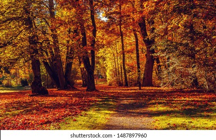 Autumn landscape beautiful colored trees in the forest, glowing in sunlight. wonderful picturesque background. color in nature. gorgeous view. Amazing nature landscape.