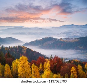 Autumn landscape with a beautiful forest in the mountains and morning fog