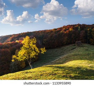 Autumn landscape with a beautiful tree on a hill. Mountain deciduous forest