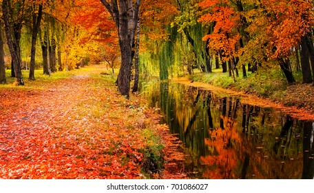 AUTUMN FOREST TREES POSTER LEAVES NATURE BEAUTIFUL SCENE PARK  A3 A4 SIZE