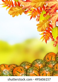 autumn landscape with bright colorful foliage. Indian summer. pumpkin