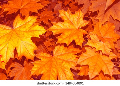 autumn landscape with bright colorful leaves. Indian summer. foliage