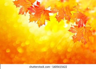 autumn landscape with bright colorful leaves. Indian summer.