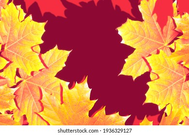 autumn landscape with bright colorful leaves. Indian summer. foliage.