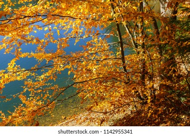 Autumn landscape by the lake view through tree twigs and orange leaves.
