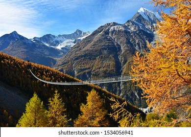 Autumn landscape with the Charles Kuonen suspension bridge with larch trees, mountains and blue sky background.