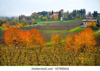 Autumn landscape in Collio Wine region, Friuli Venezia Giulia, Italy