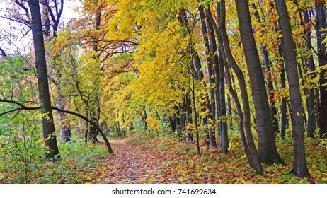Autumn landscape with colorful  leaves and trees alone path in the forest.