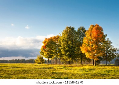 Autumn landscape of colorful trees on green meadow in park in clear warm evening. Warm sunlight falls on trees and grass. Vibrant fall nature. Idyllic scene of autumn. Yellow leaves on trees