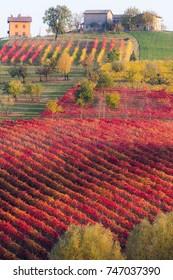 Autumn landscape, colorful vineyards and hills in Castelvetro di Modena, Lambrusco Grasparossa red wine region.