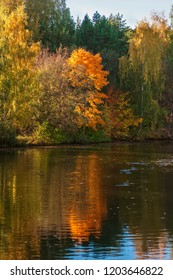 Autumn landscape, colorful vivid foliage of trees, sunny day. Reflection of bright forest in water