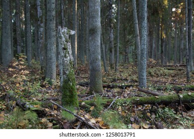 Autumn landscape in the coniferous-small-leaved forest