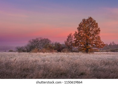 Autumn landscape at dawn. Colorful trees on meadow. Fall. Scenery autumn in early morning with beautiful color sky on sunrise