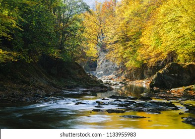 Autumn landscape with a deciduous forest and a river in the mountains. Beautiful trees with yellow foliage