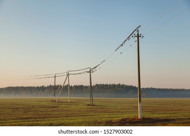 Autumn landscape with electric poles in the field and starlings sitting on wires