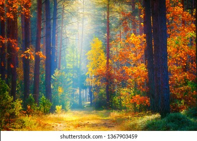 Autumn landscape. Fall background. Forest sunlight. Fall nature. Trees with colorful leaves in forest. Autumn morning in picturesque forest.