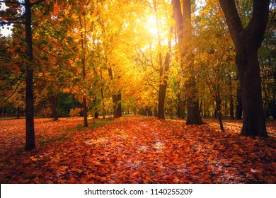 Autumn landscape. Fall scene. Tranguil background. Autumn park with coloful foliage in sunlight. Yellow red orange leaves covering footpath and trees.