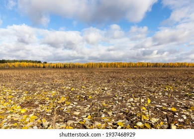 autumn landscape with fallen leaves and yellow-leaved trees in the forest in the distance