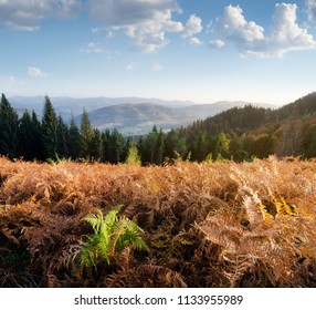 Autumn landscape with fern in the mountains