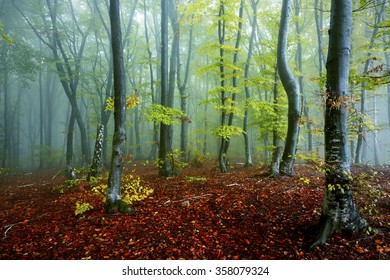 Autumn landscape in foggy forest