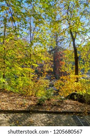Autumn landscape, foliage of yellow, orange, green colors, nice lined branches, beauty of nature, park, paving stone