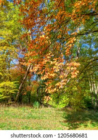 Autumn landscape, foliage of yellow, orange, green colors, nice lined branches, beauty of nature
