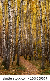 Autumn landscape with footpath and birch forest