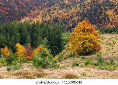 Autumn landscape. Forest with colorful trees on the mountain slopes