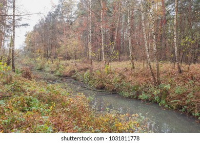 Autumn landscape with a forest river. Nature in the vicinity of Pruzhany, Brest region, Belarus.