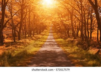 Autumn landscape forest road sunset