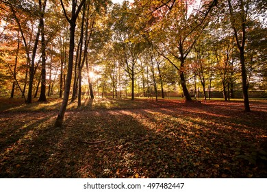 Autumn landscape of a forest with two trees and leaves in a sunny day