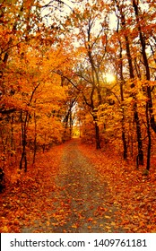 Autumn landscape forest. Yellow trees and road with sun