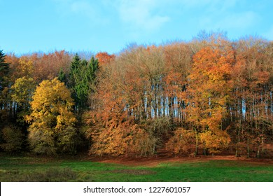 Autumn landscape with and golden colors.