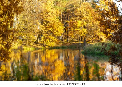Autumn landscape. Golden trees and small lake in rays of sun.