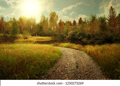 Autumn landscape with gravel road and forest
