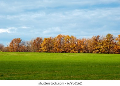 Autumn landscape with green herb and yellow tree