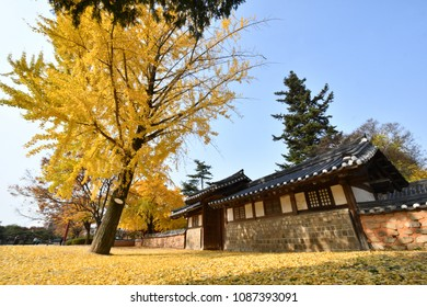 The Autumn Landscape of Jeonju Gyeonggijeon Hall in Jeonju, South Korea