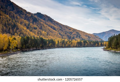 Autumn landscape of the Katun river. A view of the river Katun. Mountain Altai, Siberia, Russia.