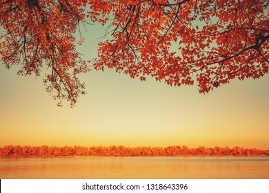 Autumn landscape with lake. Branches with yellow leaves over lake