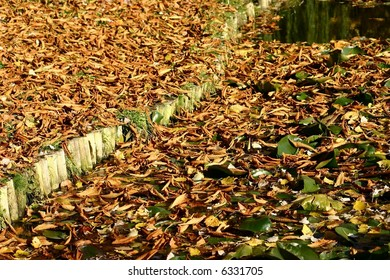 Autumn landscape with leaves