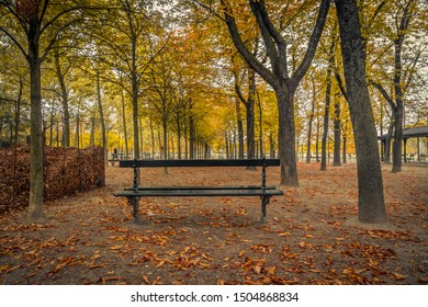 Autumn landscape with a lonely bench under trees, in a park in Paris, France