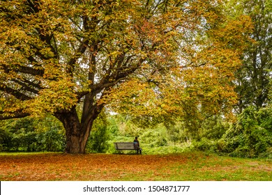Autumn landscape with a lonely woman sat on a bench under a tree in a park in Paris, France