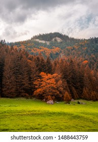 Autumn Landscape with Meadow and Forest under Rocky Ohniste Hill in Slovakia - Shutterstock ID 1488443759