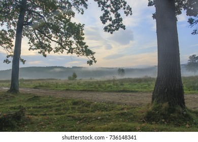 autumn landscape with meadow, trees and morning mist