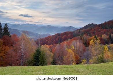 Autumn landscape in mountains. Ukraine, Carpathians