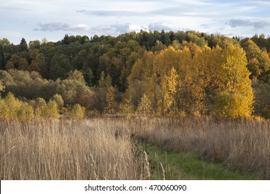 Autumn landscape. Multicolor forest on a hill in the depths of the frame, the Golden birch grove at its foot, the path through the high dry grass in the foreground.